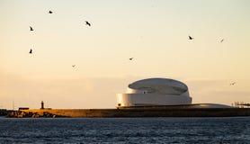 Seagulls Above Cruise Terminal stock image