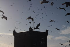 Seagulls. Above the fortress in Essaouira royalty free stock photo