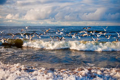 Seagulls Above The Sea Stock Photos