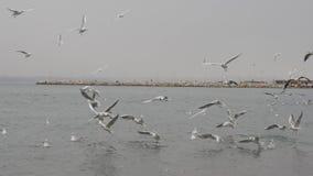 Seagulls above the sea near Istanbul Turkey. Seagulls flying above the sea in Yalove near Istanbul Turkey, winter time stock video footage