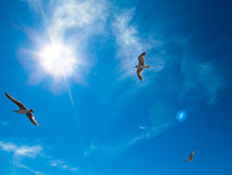 Seagulls against the bright sky and the sun. Heavenly background Royalty Free Stock Photography
