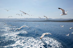 Seagulls against sea and sky Stock Image