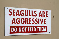 Seagulls are Aggressive. Royalty Free Stock Images