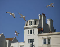 Seagulls in the air against blue skies. Royalty Free Stock Images
