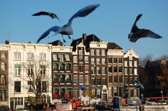 Seagulls in Amsterdam Royalty Free Stock Photo