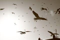 Seagulls. Around fish market in Essaouira royalty free stock image