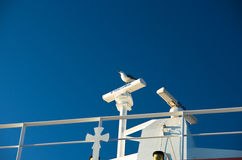 Seagulls as a deck passangers on a ferry to Thassos island Stock Photography