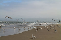 Free Seagulls At The Beach On A Foggy Day Royalty Free Stock Photos - 80054648