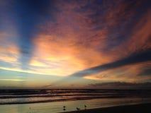 Seagulls on Atlantic Ocean Beach during Blue Dawn with Crepuscular Rays. Stock Photos