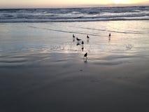 Seagulls on Atlantic Ocean Beach during Dawn. Stock Images