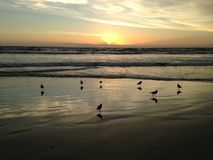 Seagulls on Atlantic Ocean Beach during Dawn. Royalty Free Stock Images