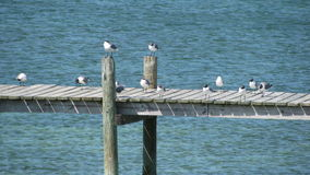 Seagulls awaiting dinner stock image
