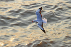 Seagulls at  Bang Pu The new home for the warm fertile. Popular tourist destinations in Thailand. Royalty Free Stock Photos