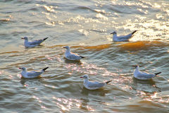 Seagulls at  Bang Pu The new home for the warm fertile. Popular tourist destinations in Thailand. Royalty Free Stock Photo