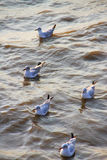 Seagulls at  Bang Pu The new home for the warm fertile. Popular tourist destinations in Thailand. Stock Photo
