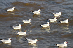 Seagulls at  Bang Pu The new home for the warm fertile. Popular tourist destinations in Thailand. Stock Photography