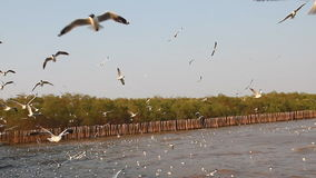 Seagulls stock footage