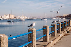Seagulls in bay. With yachts on the background Stock Photos