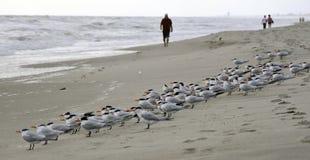 Seagulls on beach royalty free stock photos
