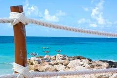 Seagulls in beach. Seagulls in cancun caribbean holidays beach Stock Photo