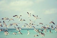 Seagulls, Beach, Bird, Birds, Wings Stock Image