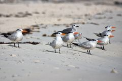 Seagulls on Beach Royalty Free Stock Photos