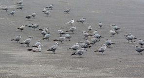 Seagulls on the beach Stock Images