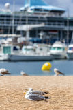 Seagulls on the beach,  fisher boats and cruise ship Royalty Free Stock Images