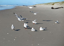 Seagulls on beach Stock Photos
