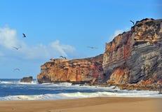 Seagulls on the beach of Nazare stock photos