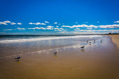 Seagulls on the beach in Old Orchard Beach, Maine. Stock Photo