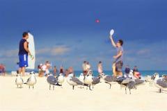 Seagulls on Beach in Playa del Carmen, Mexico. Tropical beach in Playacar and Playa del Carmen, Mexico Royalty Free Stock Photos
