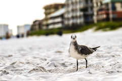 Seagulls on beach sand Stock Image