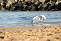 Seagulls on beach sand Stock Photos