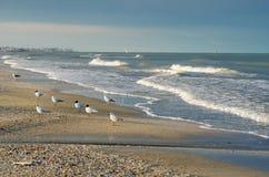 Seagulls on the beach Royalty Free Stock Photos
