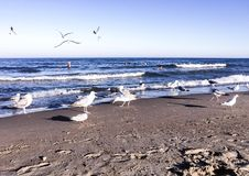 Seagulls on a beach at the sea Royalty Free Stock Photo
