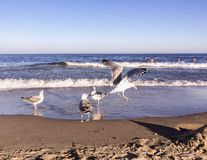 Seagulls on a beach at the sea Stock Image