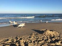 Seagulls on a beach at the sea Stock Photo