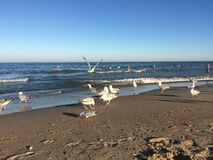 Seagulls on a beach at the sea Royalty Free Stock Images