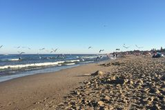Seagulls on a beach at the sea Royalty Free Stock Image