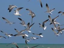 Seagulls On The Beach Stock Photos