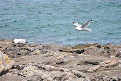 Seagulls on the beach Royalty Free Stock Photo