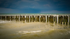 Seagulls at the beach. Seagulls sitting on wooden poles in the surf at the beach Stock Images