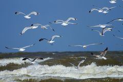 Seagulls at the beach Royalty Free Stock Photography