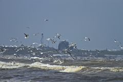 Seagulls at the beach Stock Photography