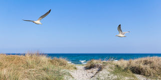 Seagulls on the beach Stock Image