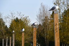 The seagulls on the beach volleyball net post. 