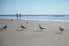 Seagulls on beach Royalty Free Stock Photography