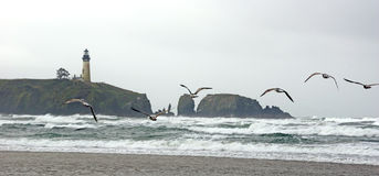 Seagulls on beach with Yaquina Head Lighthouse Royalty Free Stock Photography