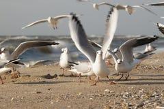 Seagulls. On the beach in Zatoka, Ukraine Royalty Free Stock Photos